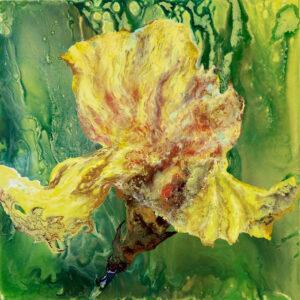 7.Sunny Iris